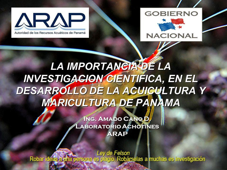 Ing. Amado Cano D. Laboratorio Achotines ARAP