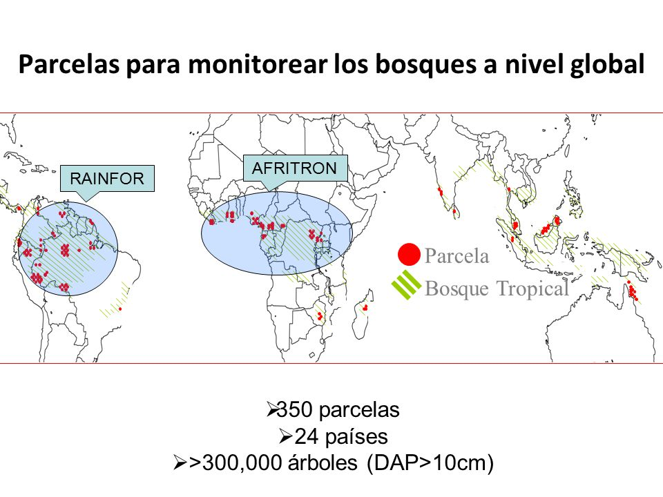 Parcelas para monitorear los bosques a nivel global