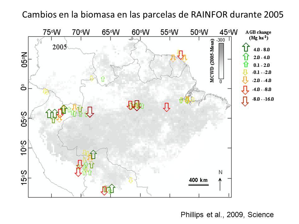 Cambios en la biomasa en las parcelas de RAINFOR durante 2005