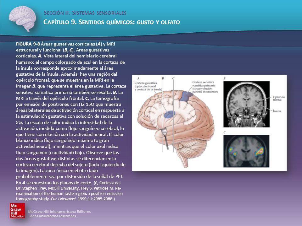 FIGURA 9-8 Áreas gustativas corticales (A) y MRI estructural y funcional (B, C).