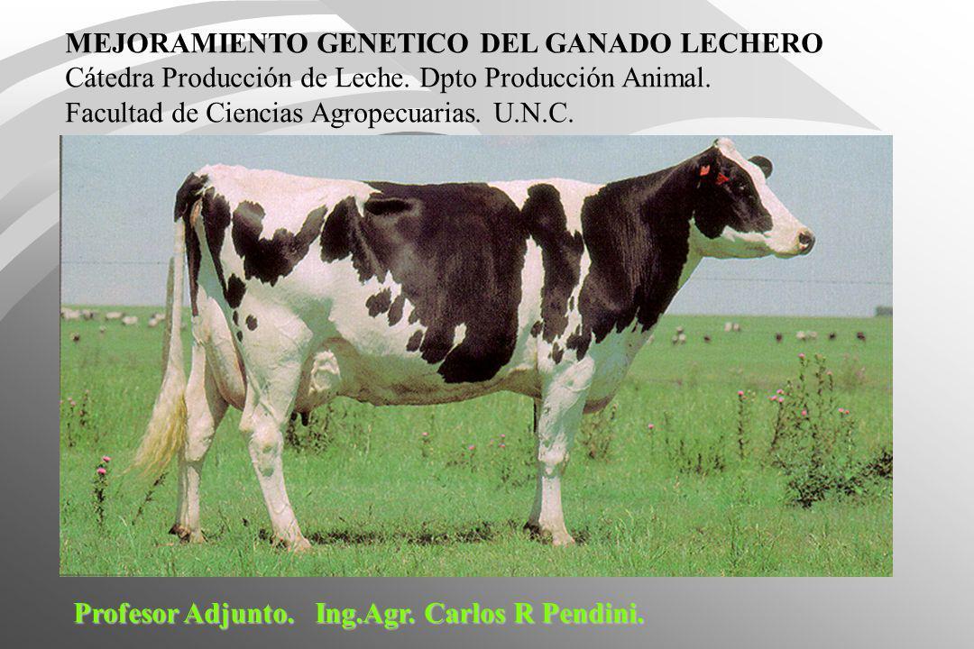 MEJORAMIENTO GENETICO DEL GANADO LECHERO
