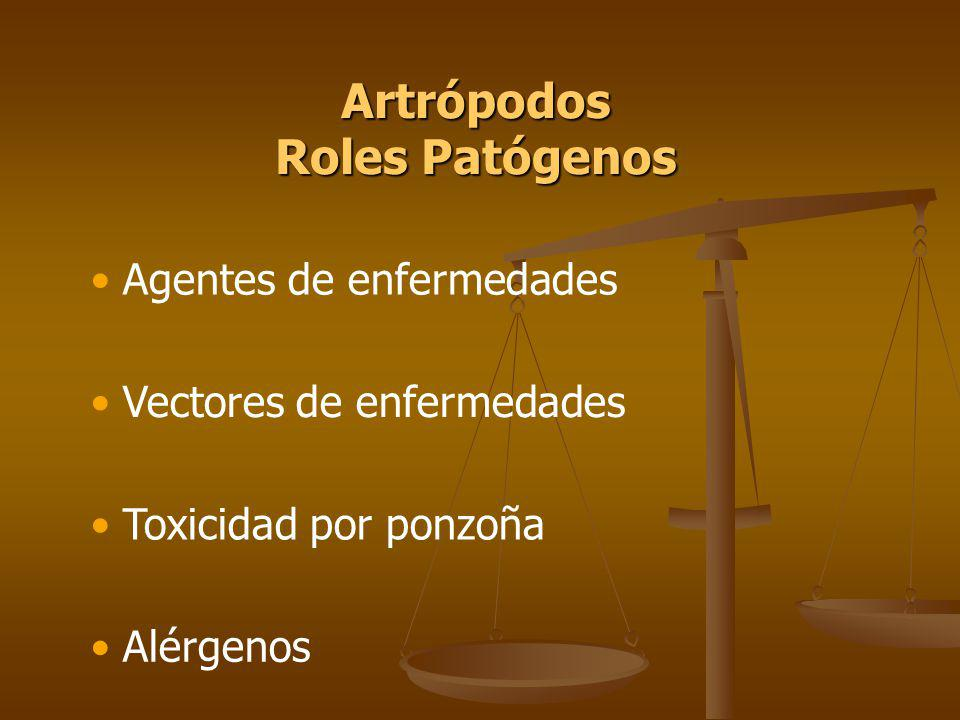 Artrópodos Roles Patógenos