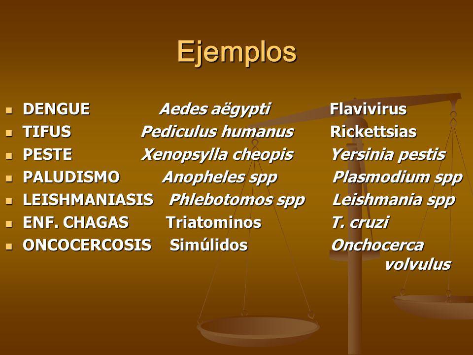 Ejemplos DENGUE Aedes aëgypti Flavivirus