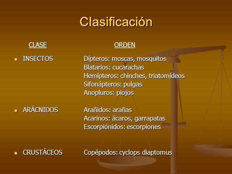 Clasificación INSECTOS Dípteros: moscas, mosquitos