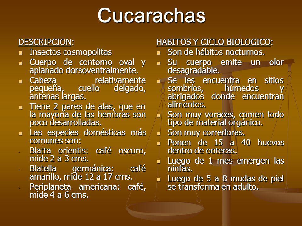 Cucarachas DESCRIPCION: Insectos cosmopolitas