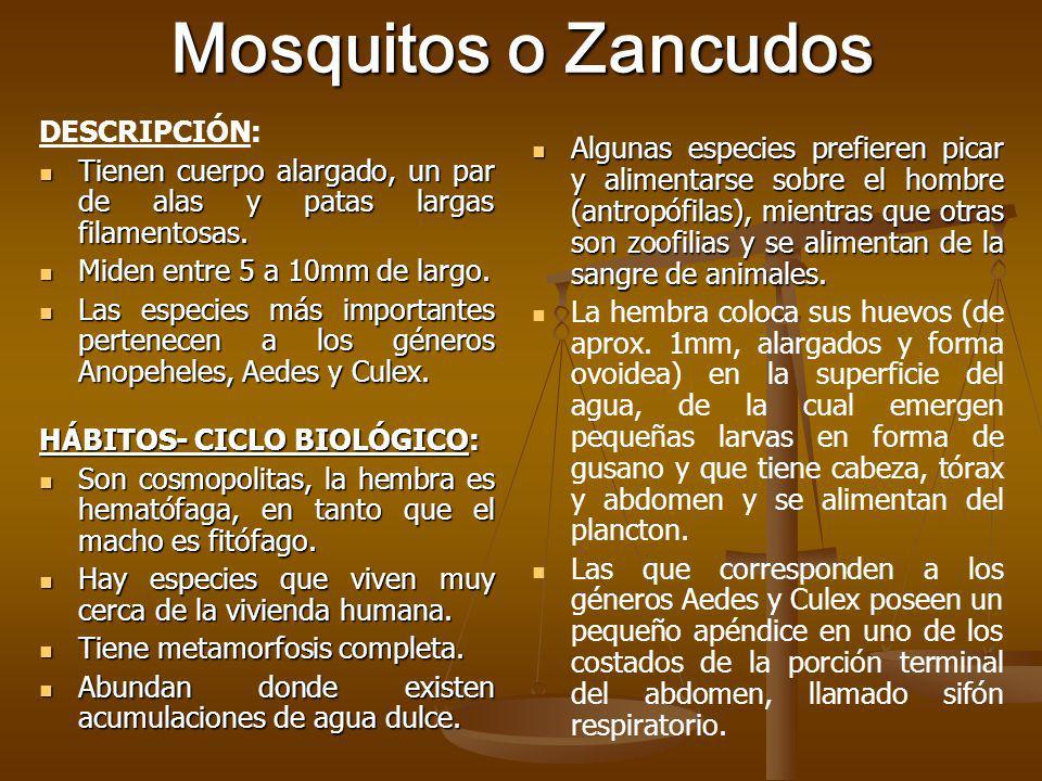 Mosquitos o Zancudos DESCRIPCIÓN: