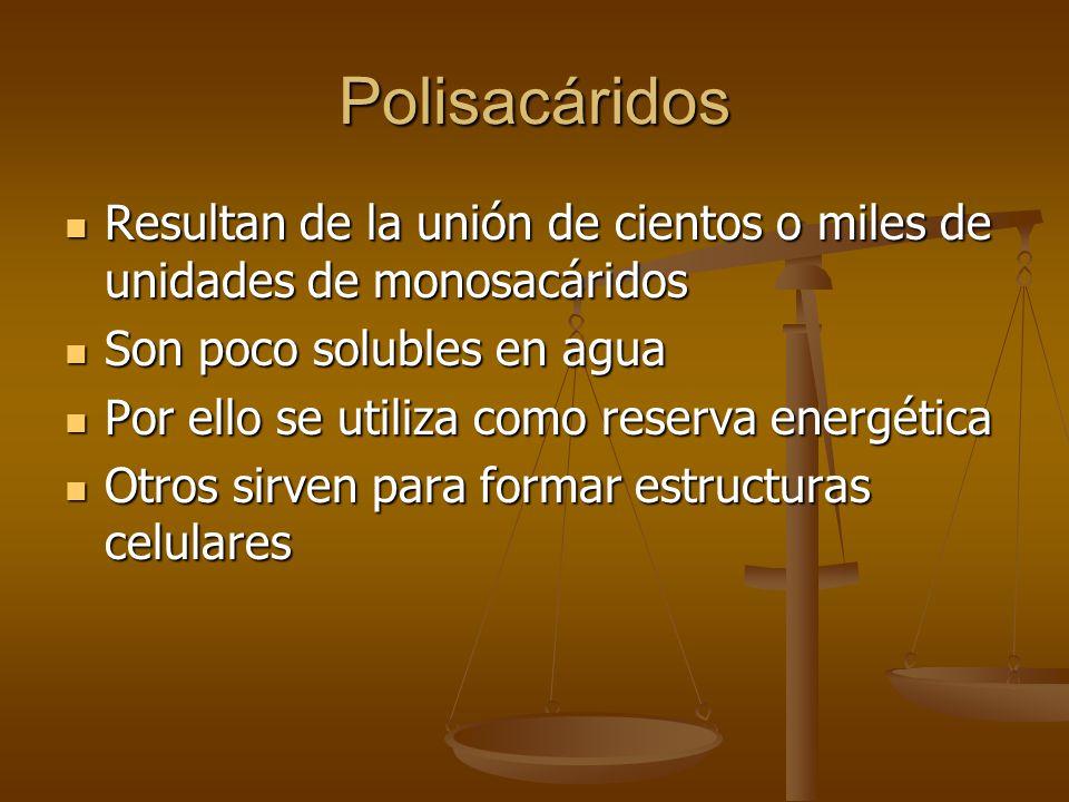 Polisacáridos Resultan de la unión de cientos o miles de unidades de monosacáridos. Son poco solubles en agua.