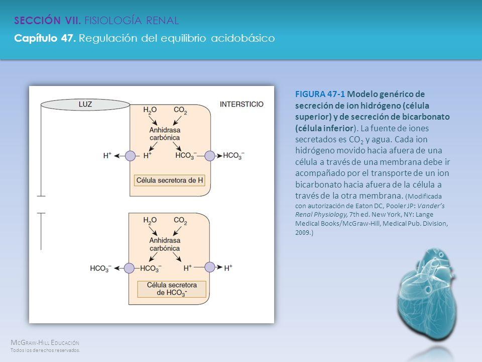 FIGURA 47-1 Modelo genérico de secreción de ion hidrógeno (célula superior) y de secreción de bicarbonato (célula inferior).