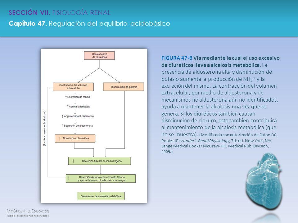 FIGURA 47-6 Vía mediante la cual el uso excesivo de diuréticos lleva a alcalosis metabólica.