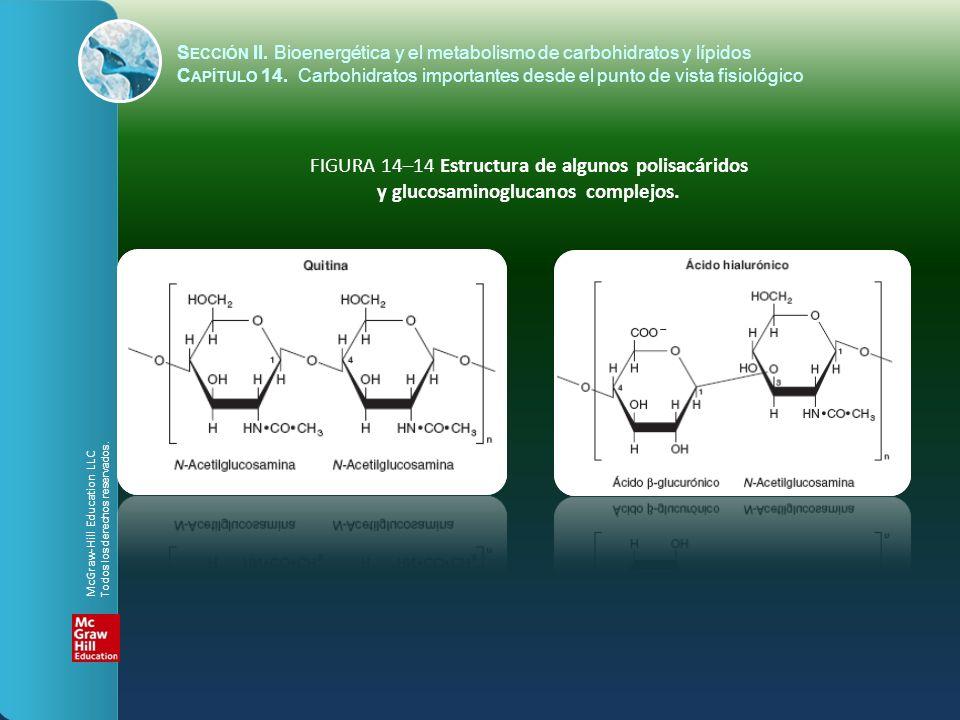 y glucosaminoglucanos complejos.