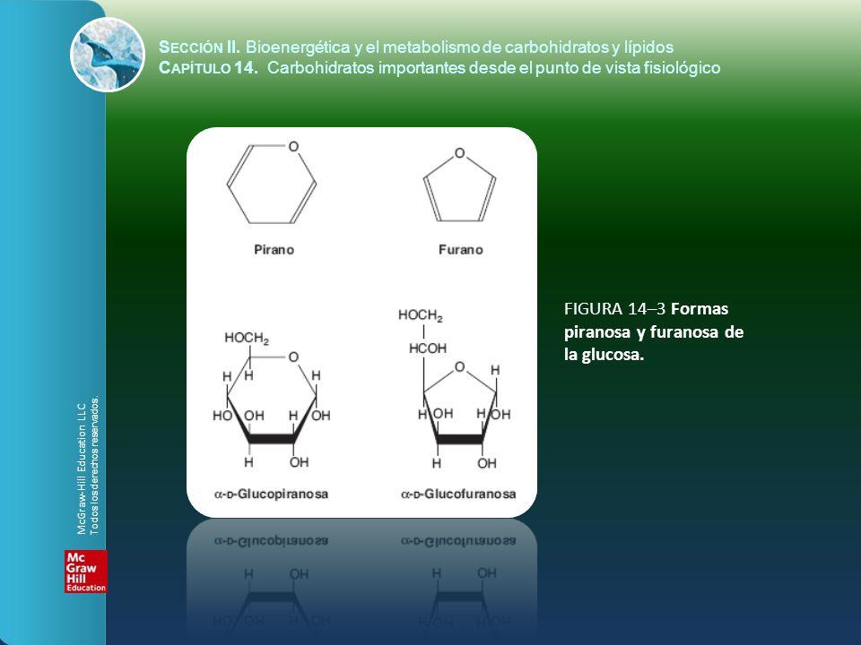 FIGURA 14–3 Formas piranosa y furanosa de la glucosa.