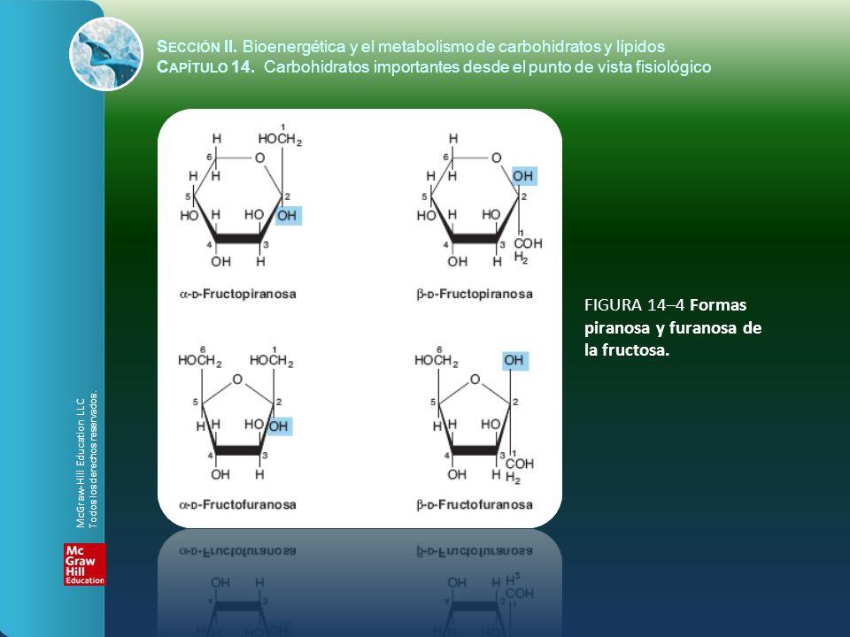 FIGURA 14–4 Formas piranosa y furanosa de la fructosa.