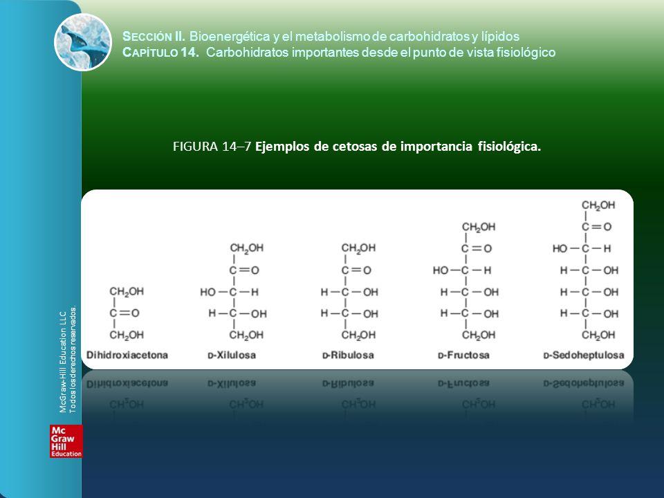 FIGURA 14–7 Ejemplos de cetosas de importancia fisiológica.