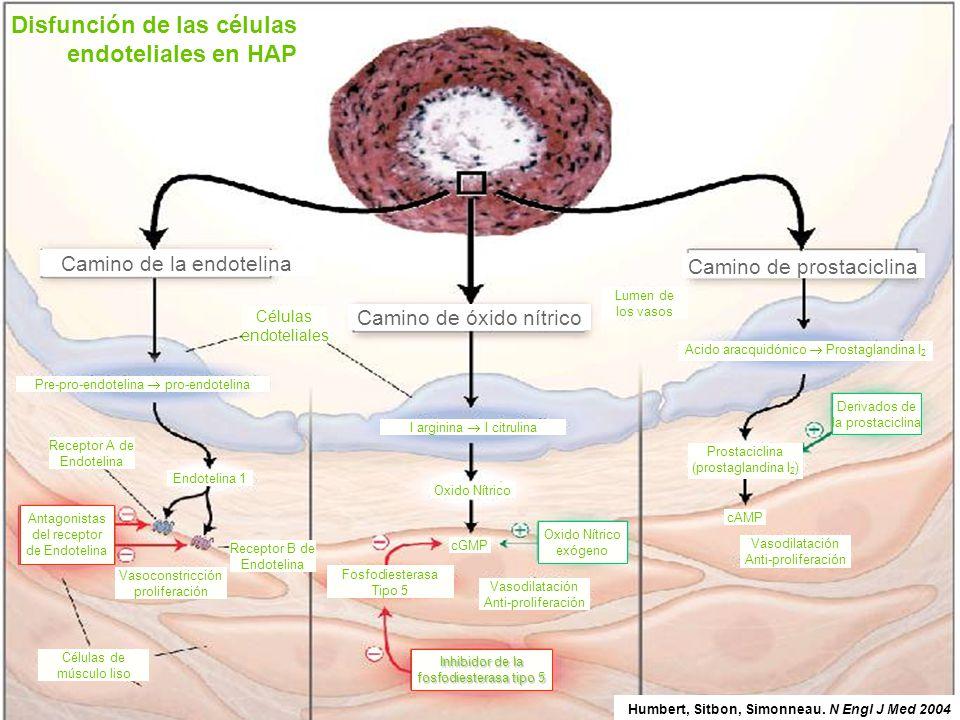Disfunción de las células endoteliales en HAP