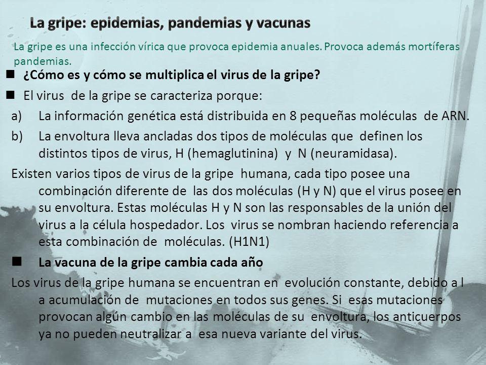 La gripe: epidemias, pandemias y vacunas