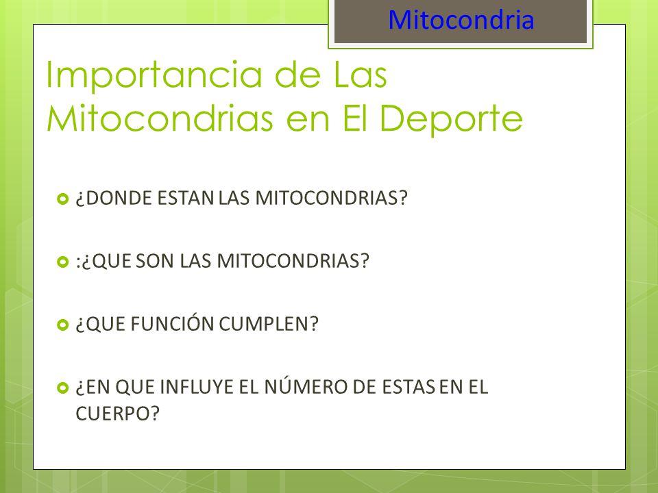 Importancia de Las Mitocondrias en El Deporte