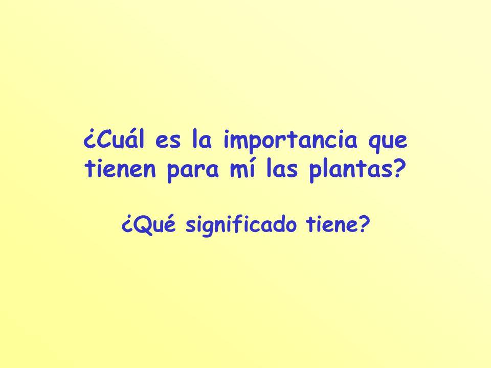 ¿Cuál es la importancia que tienen para mí las plantas