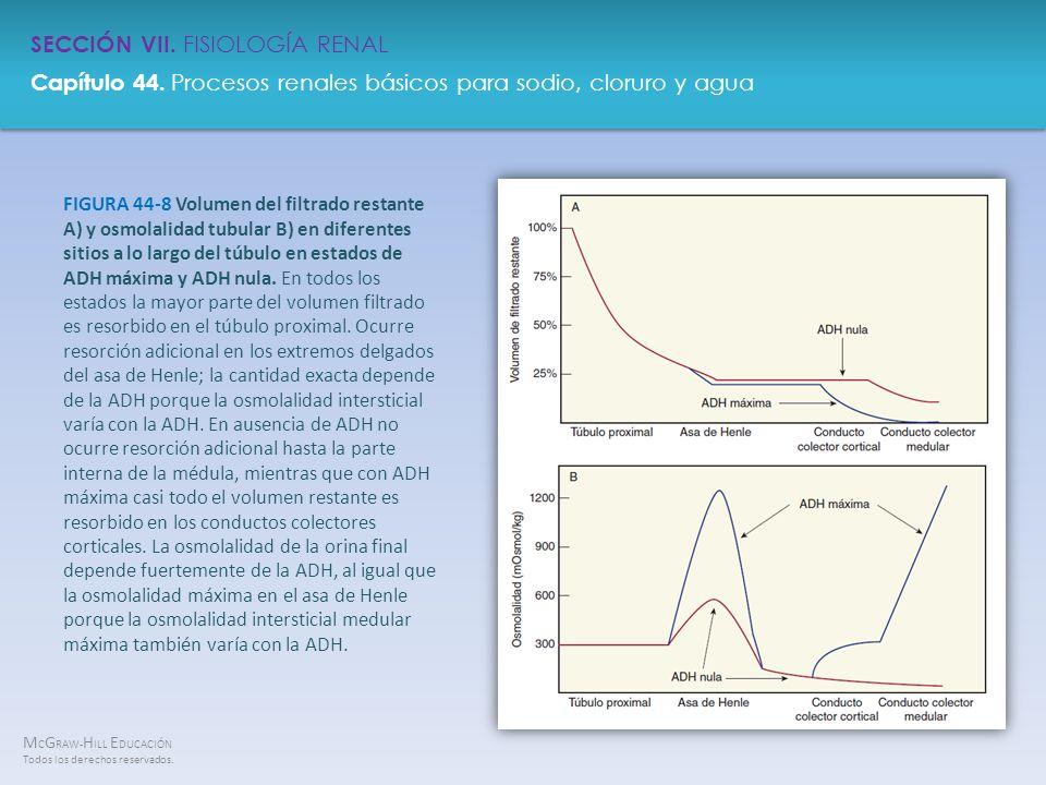 FIGURA 44-8 Volumen del filtrado restante A) y osmolalidad tubular B) en diferentes sitios a lo largo del túbulo en estados de ADH máxima y ADH nula.