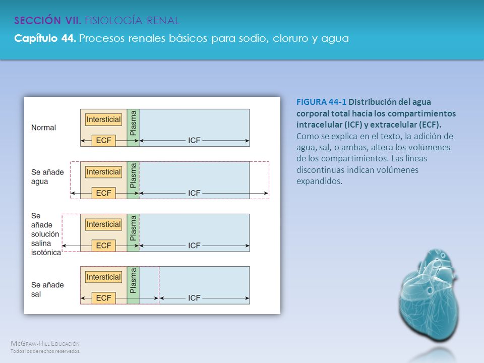 FIGURA 44-1 Distribución del agua corporal total hacia los compartimientos intracelular (ICF) y extracelular (ECF).