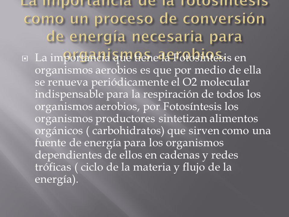 La importancia de la fotosíntesis como un proceso de conversión de energía necesaria para organismos aerobios.