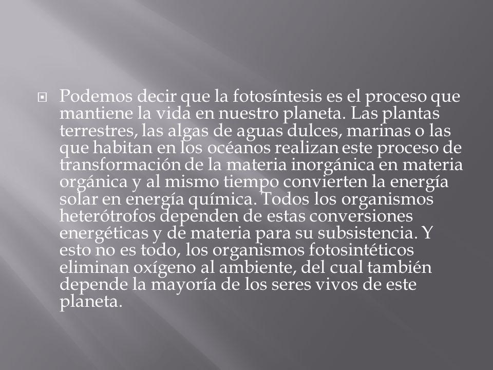 Podemos decir que la fotosíntesis es el proceso que mantiene la vida en nuestro planeta.
