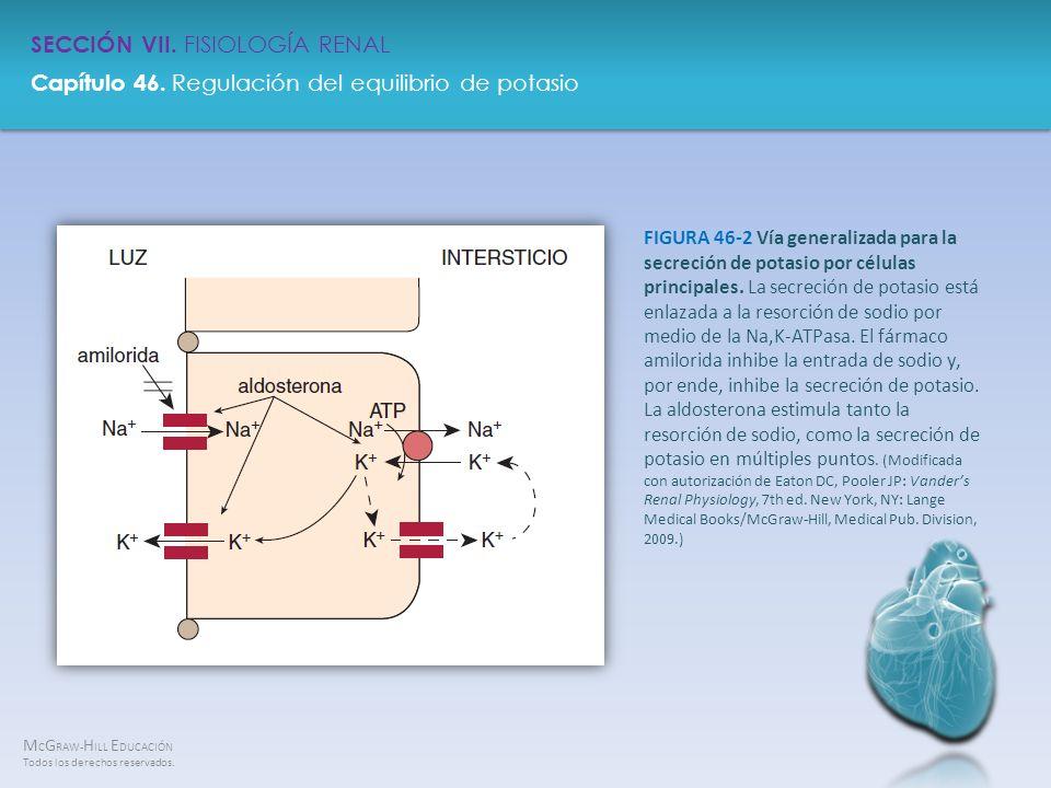 FIGURA 46-2 Vía generalizada para la secreción de potasio por células principales.