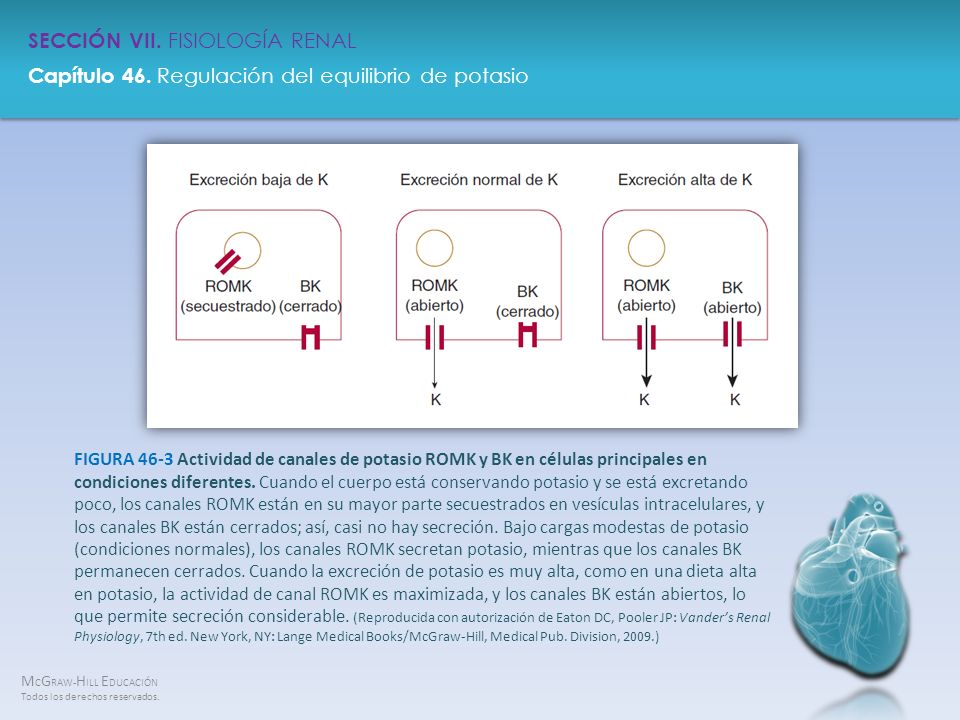 FIGURA 46-3 Actividad de canales de potasio ROMK y BK en células principales en condiciones diferentes.