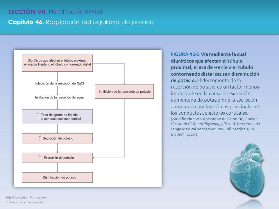 FIGURA 46-5 Vía mediante la cual diuréticos que afectan el túbulo proximal, el asa de Henle o el túbulo contorneado distal causan disminución de potasio.