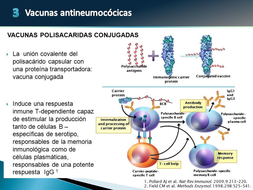 Vacunas polisacAridas conjugadas