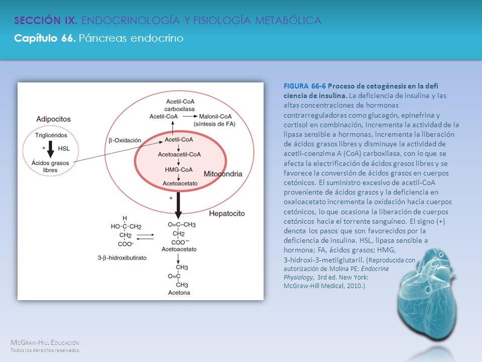 FIGURA 66-6 Proceso de cetogénesis en la defi ciencia de insulina