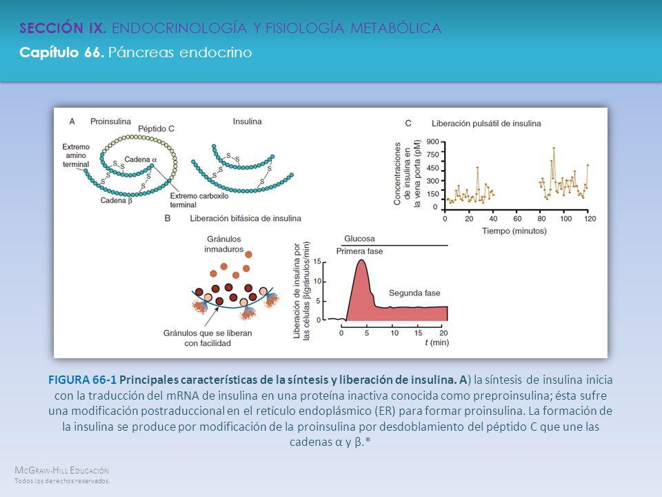 FIGURA 66-1 Principales características de la síntesis y liberación de insulina.