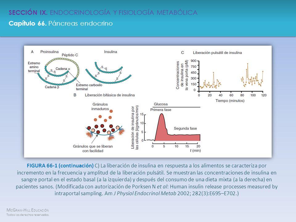 FIGURA 66-1 (continuación) C) La liberación de insulina en respuesta a los alimentos se caracteriza por incremento en la frecuencia y amplitud de la liberación pulsátil.