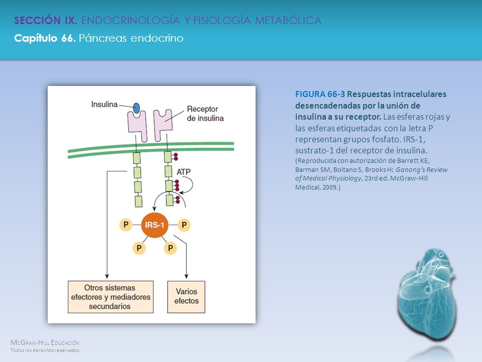 FIGURA 66-3 Respuestas intracelulares desencadenadas por la unión de insulina a su receptor.