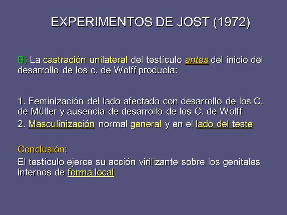EXPERIMENTOS DE JOST (1972)