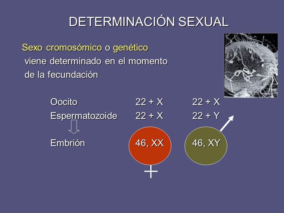 DETERMINACIÓN SEXUAL Sexo cromosómico o genético
