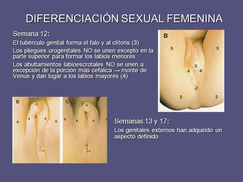 DIFERENCIACIÓN SEXUAL FEMENINA
