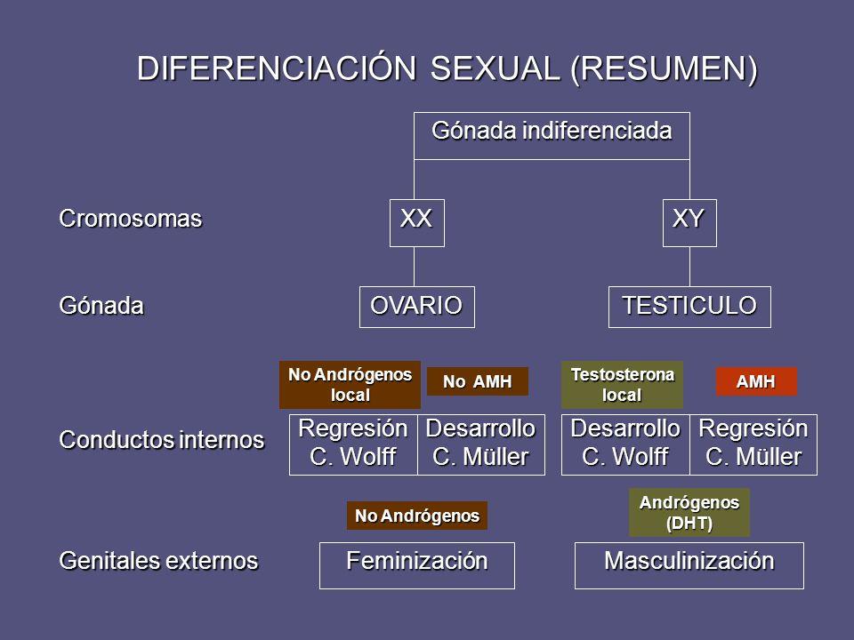 DIFERENCIACIÓN SEXUAL (RESUMEN)