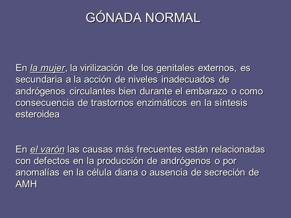 GÓNADA NORMAL