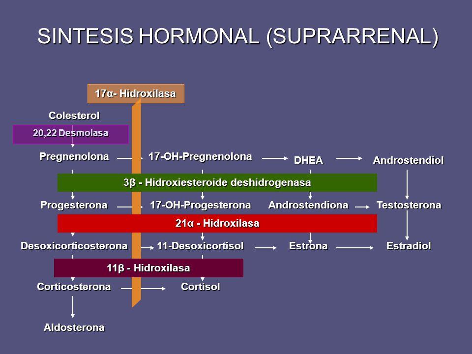 SINTESIS HORMONAL (SUPRARRENAL)