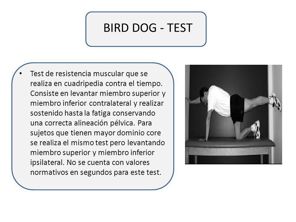 BIRD DOG - TEST