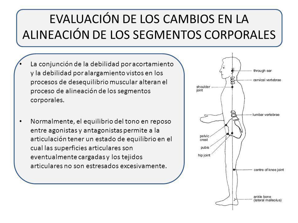 EVALUACIÓN DE LOS CAMBIOS EN LA ALINEACIÓN DE LOS SEGMENTOS CORPORALES
