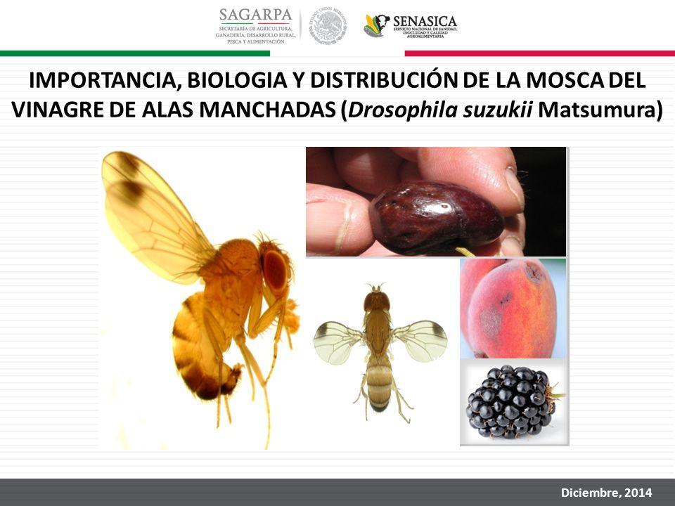 IMPORTANCIA, BIOLOGIA Y DISTRIBUCIÓN DE LA MOSCA DEL VINAGRE DE ALAS MANCHADAS (Drosophila suzukii Matsumura)