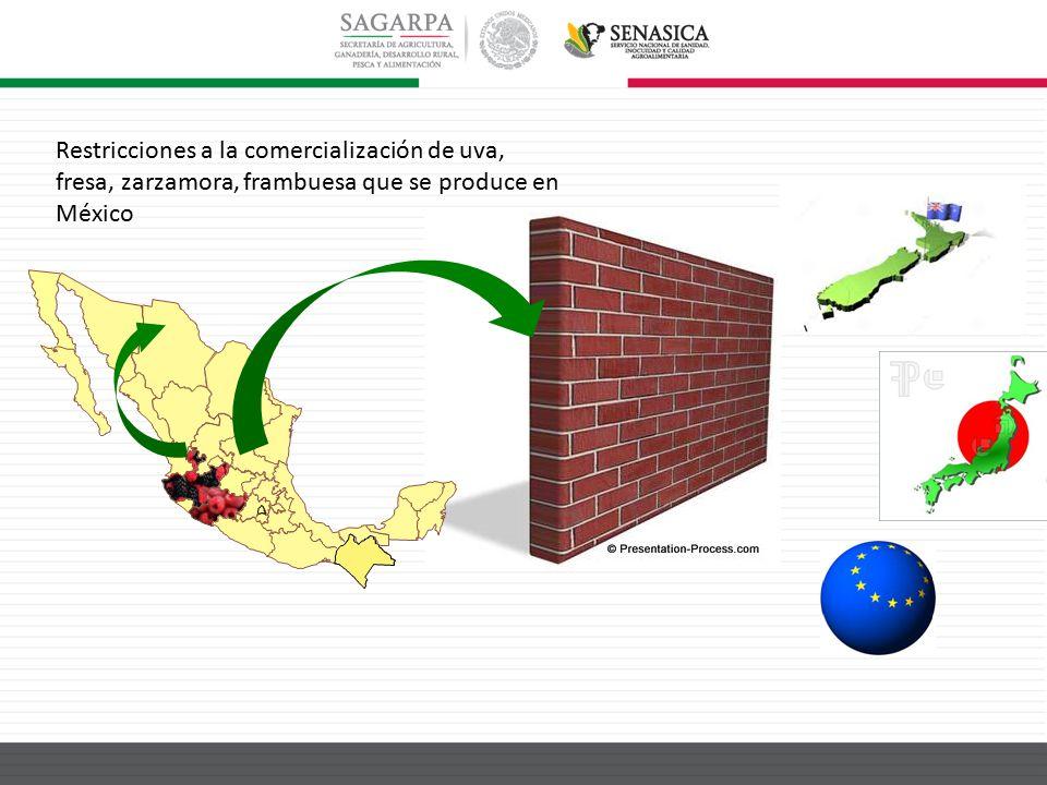 Restricciones a la comercialización de uva, fresa, zarzamora, frambuesa que se produce en México