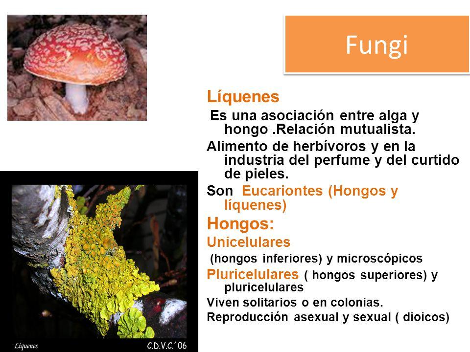 Fungi Líquenes Hongos: