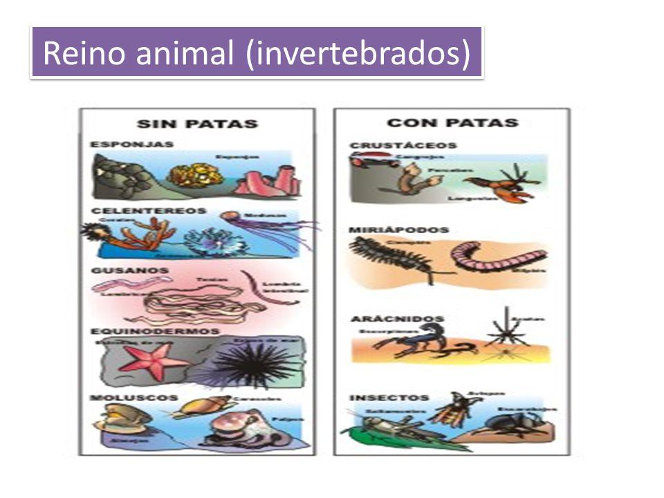 Reino animal (invertebrados)