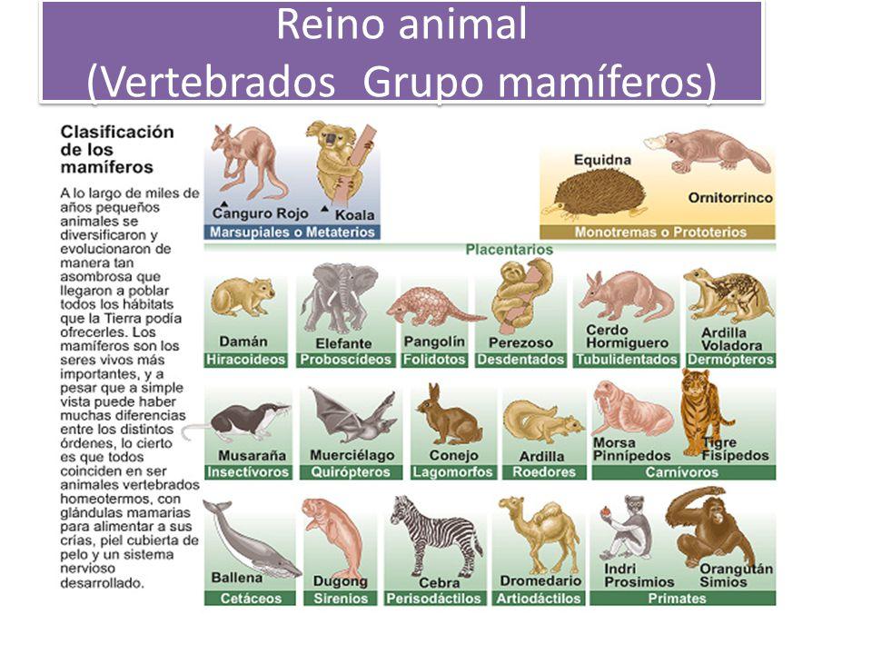 Reino animal (Vertebrados Grupo mamíferos)