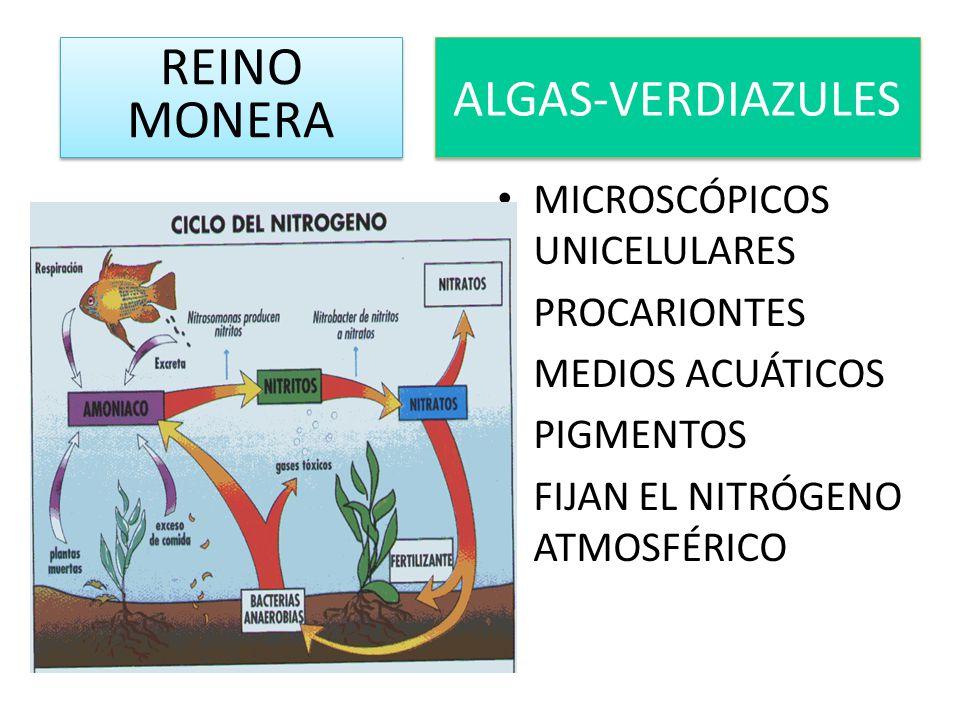 REINO MONERA ALGAS-VERDIAZULES MICROSCÓPICOS UNICELULARES PROCARIONTES