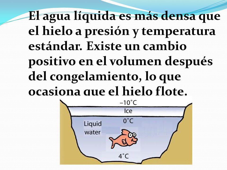 El agua líquida es más densa que el hielo a presión y temperatura estándar.