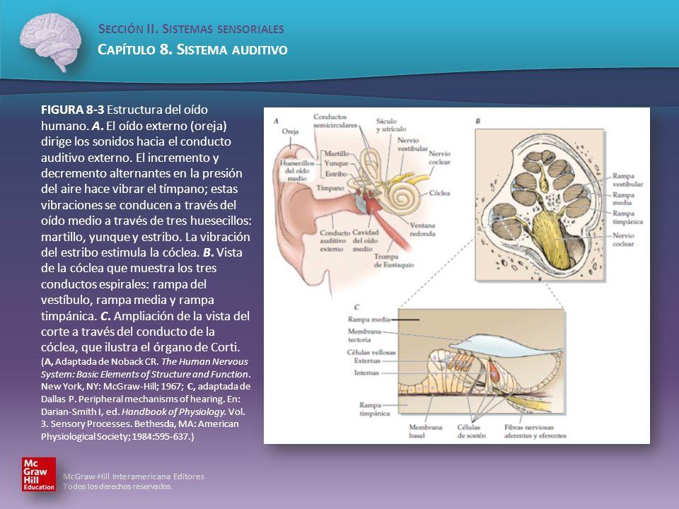 FIGURA 8-3 Estructura del oído humano. A