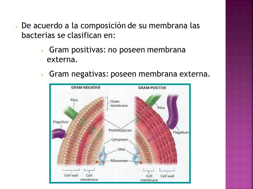 De acuerdo a la composición de su membrana las bacterias se clasifican en: